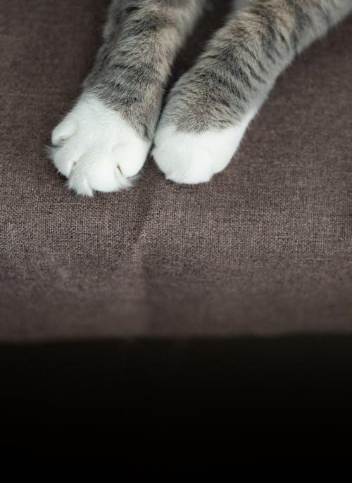 Fotobanka sbezplatnými fotkami na tému detailný záber, labka, mačací, mačka