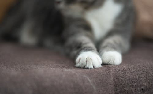 Close-up of Photo of Cat Paw