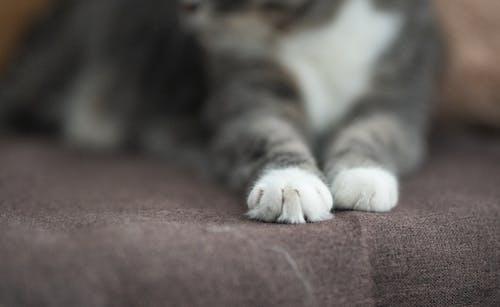 動物, 動物攝影, 家貓, 專注 的 免费素材照片