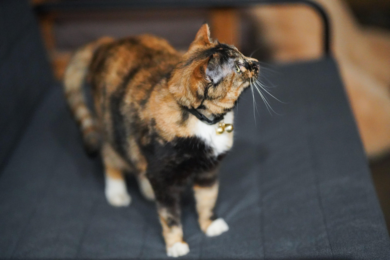 Fotos de stock gratuitas de gato grande
