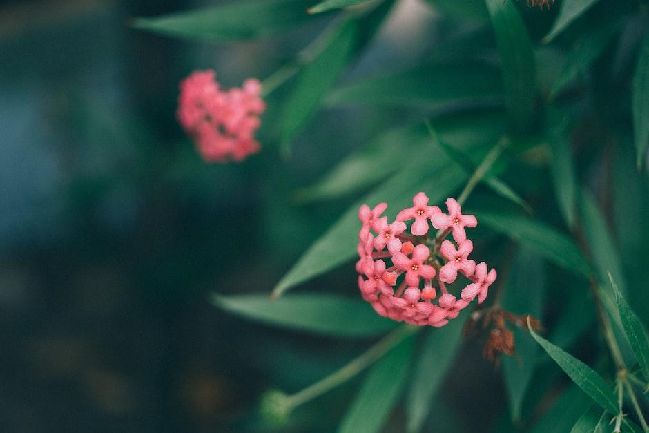 Pink Flowres Near Green Leaves Outdoor during Daytie