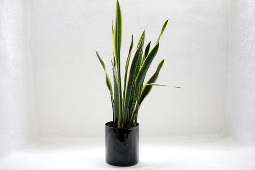 Foto stok gratis daun-daun hijau, kehidupan tenang, latar belakang putih, pot bunga