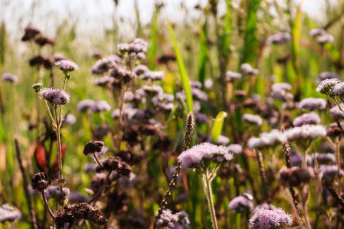 Gratis lagerfoto af 4k-baggrund, auberginer, blå blomster, bokeh