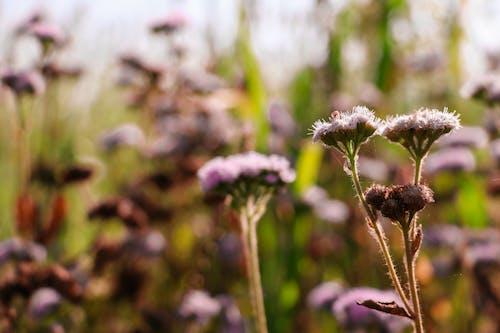 Gratis lagerfoto af 4k-baggrund, blomsterbuket, close-up, desktop tapet