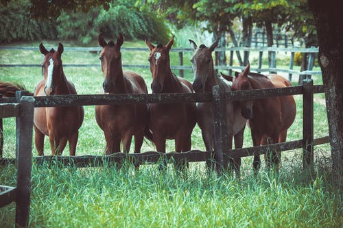 Photo of a Group of Horses