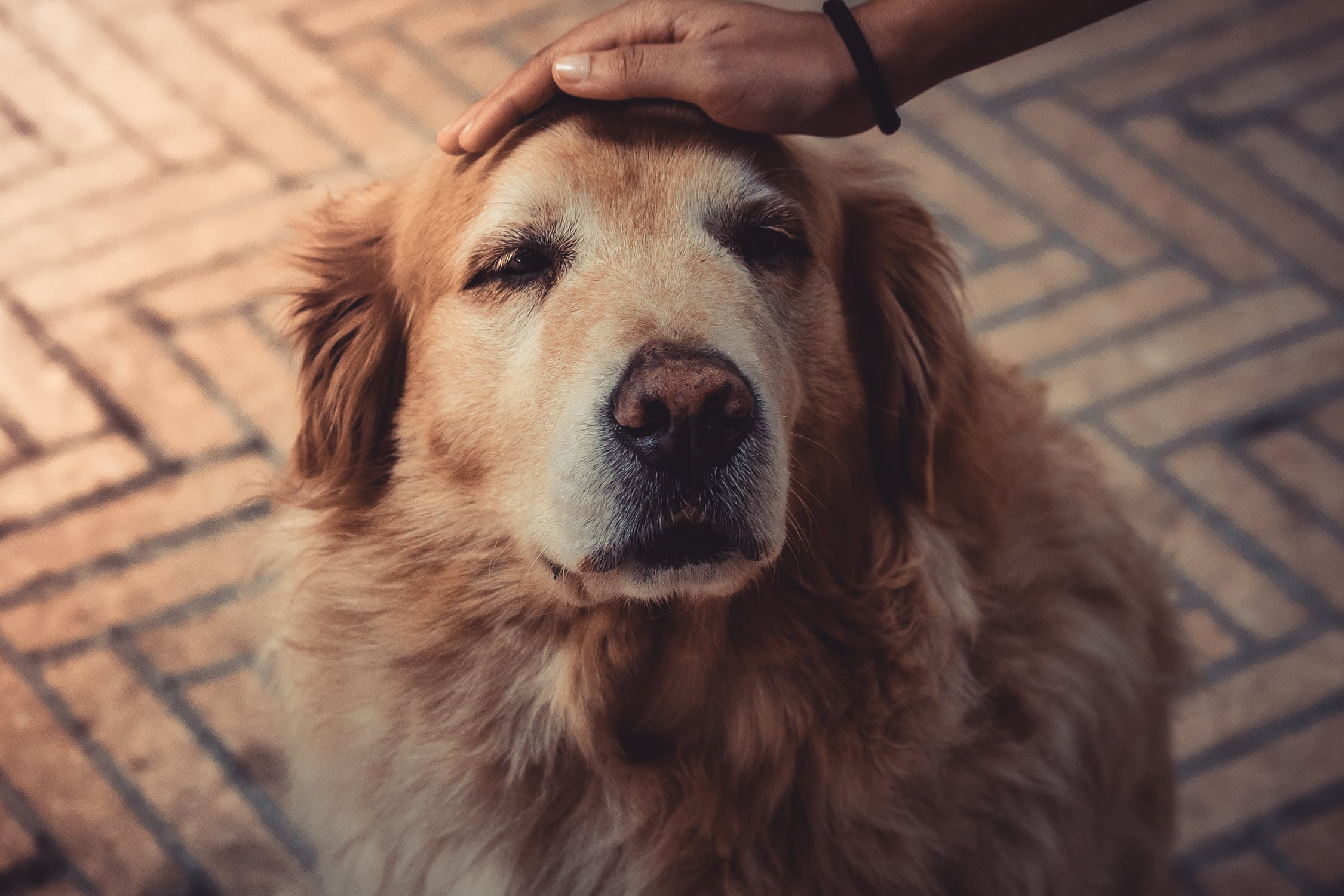Caring for Pets During Natural Disasters
