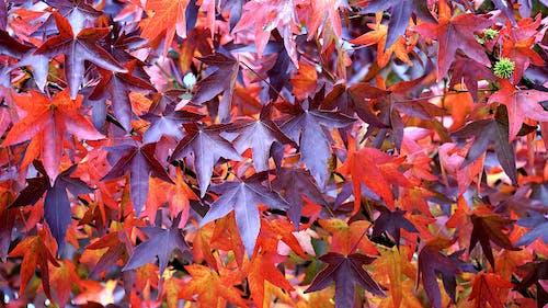 Gratis arkivbilde med anlegg, årstid, blader, brun