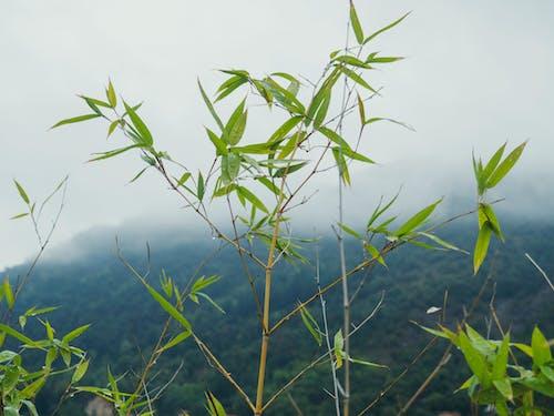Fotos de stock gratuitas de con niebla, flora, montaña, niebla
