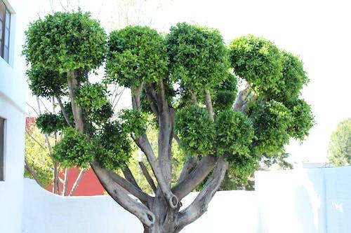 Free stock photo of arbol, tree