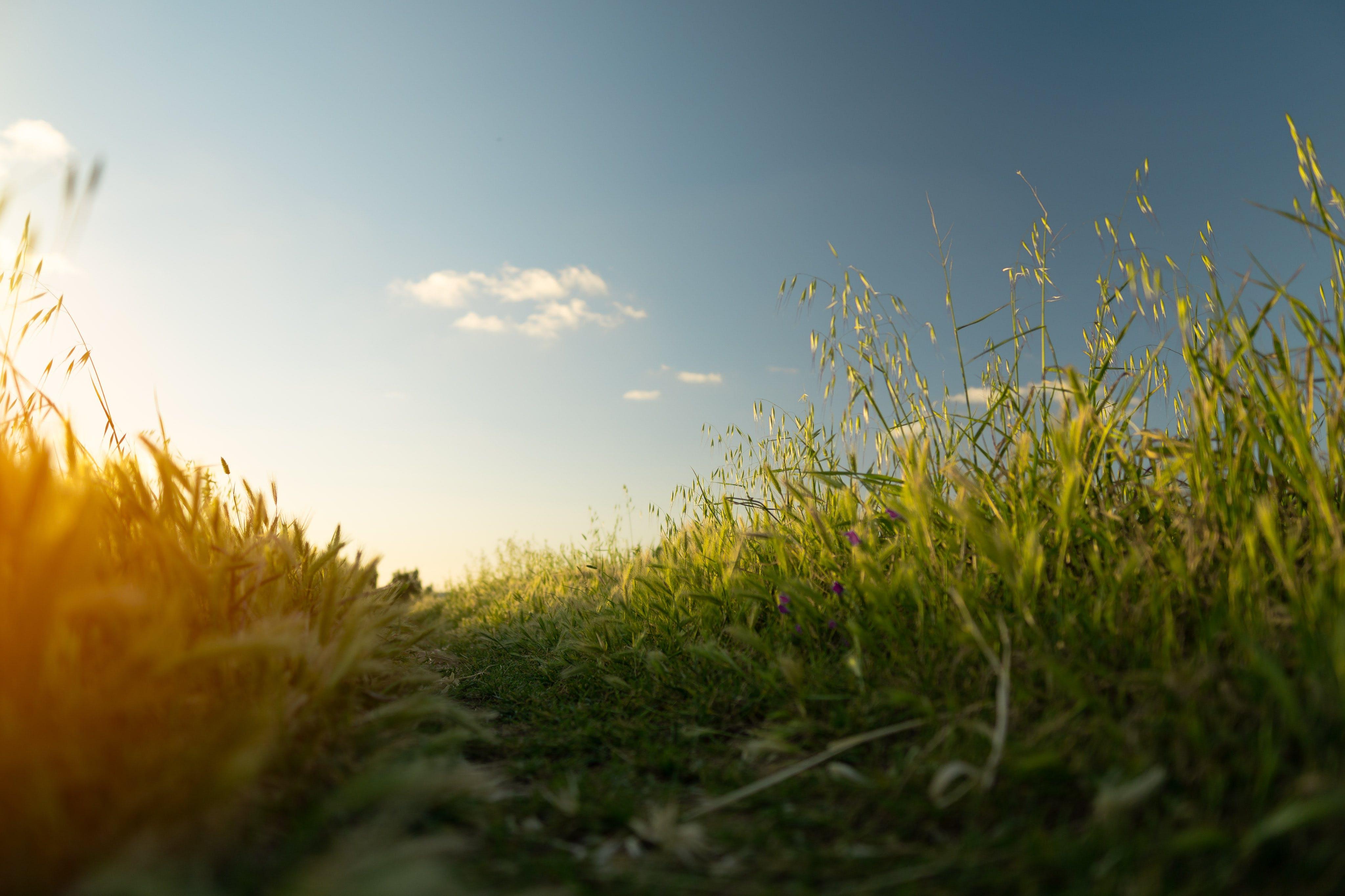 Close-Up Photo of Grass Field