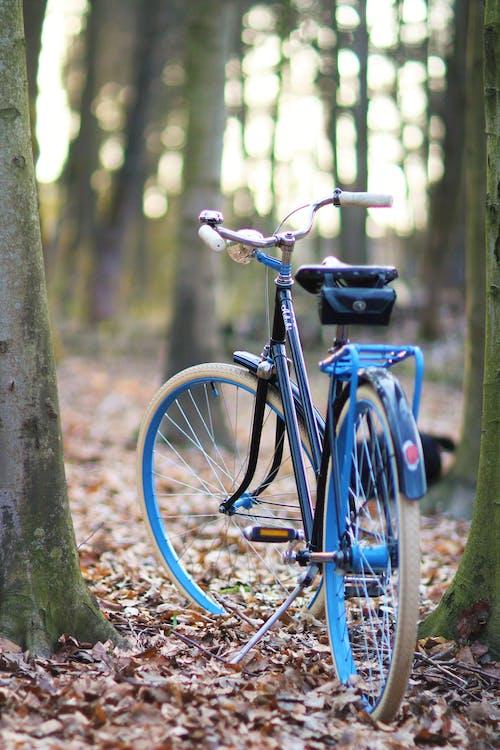 Darmowe zdjęcie z galerii z drzewa, jazda na rowerze, las, odpoczynek