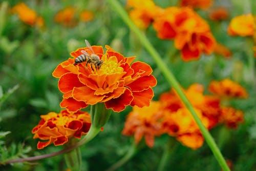 Darmowe zdjęcie z galerii z kwiat, natura, pszczoła, zielony