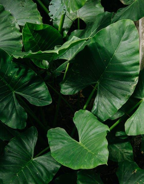 나뭇잎, 녹색, 성장, 식물의 무료 스톡 사진