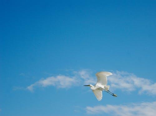 Darmowe zdjęcie z galerii z latanie, niebieski, niebo, ptak
