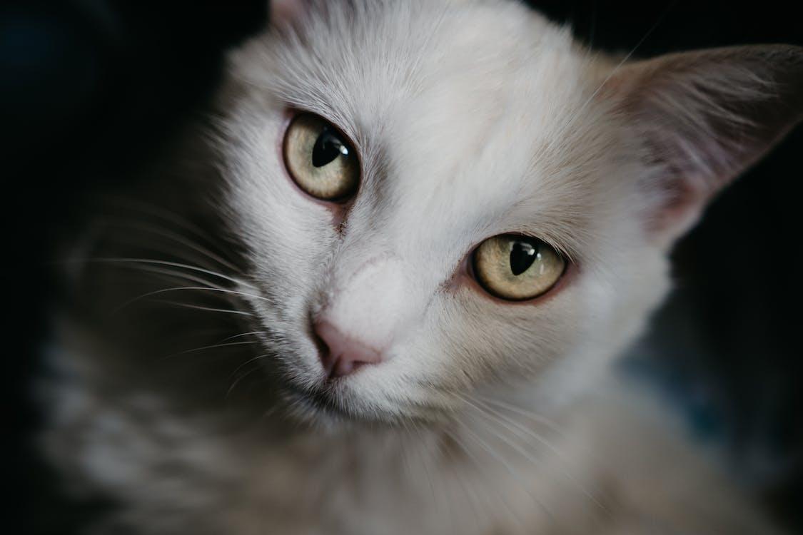 close-up, dyr, husdyr