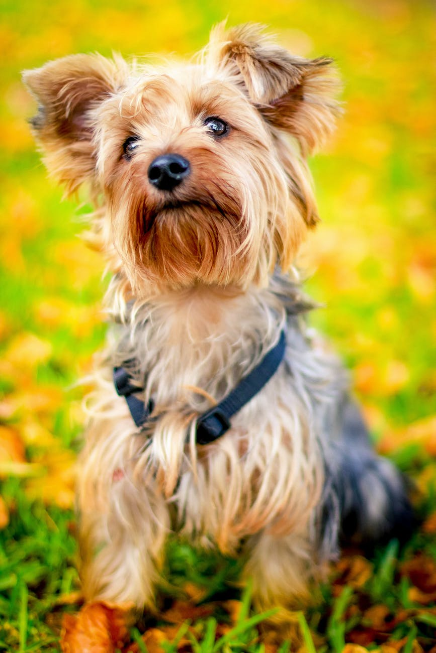Adorable Small Dog Breeds
