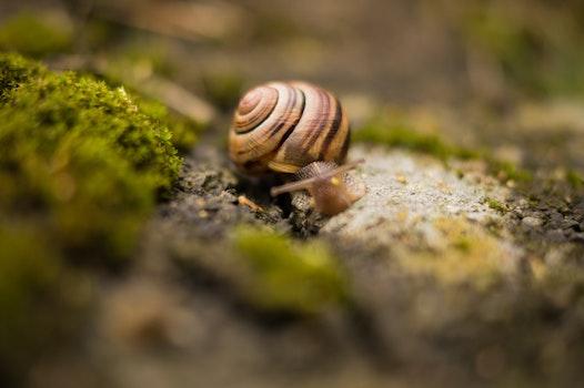 Free stock photo of nature, animal, snail, macro