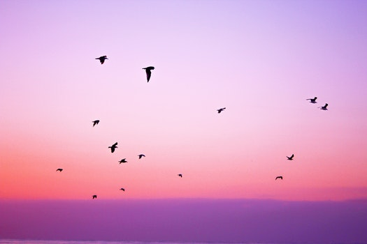 Free stock photo of nature, sky, purple, animals