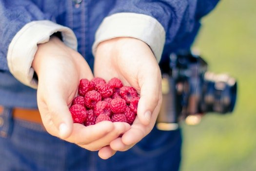 Free stock photo of healthy, hands, fruits, raspberries