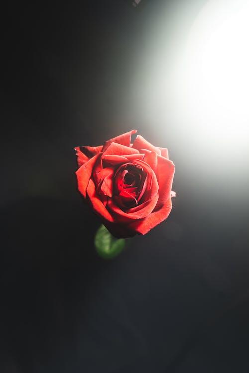 Foto d'estoc gratuïta de boira, clareja, dia de Sant Valentí, enamorat