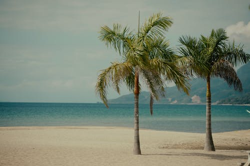 Kostnadsfri bild av palmträd, strand, stranden, strandutsikt