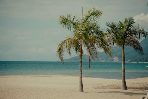 Foto stok gratis depan pantai, pantai, pemandangan pantai, pohon palem