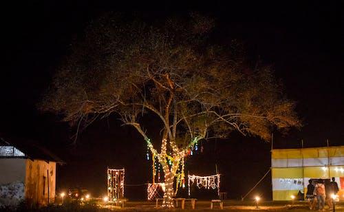 Gratis lagerfoto af fejring, nat, natlys, træ