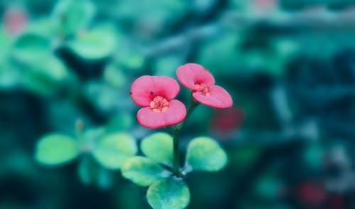 Gratis lagerfoto af blomst, fotografi, grøn, humørgrøn