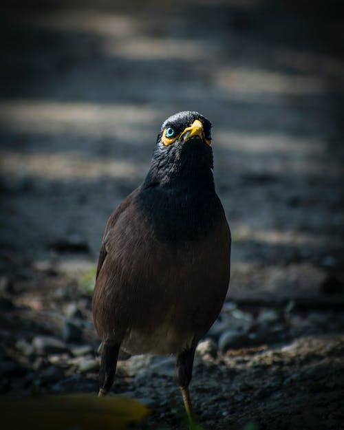 Kostnadsfri bild av blåa ögon, djurfotografi, fågel, vildfågel
