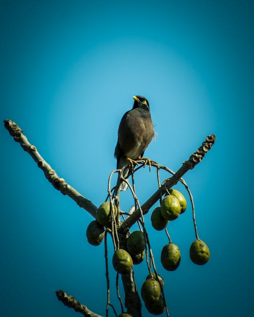 Kostnadsfri bild av blåa ögon, djurfotografi, fågel, oliver