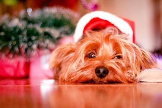 Free stock photo of animal, dog, pet, close-up
