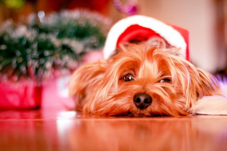 Animales Navidad