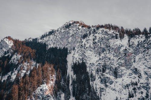 Kostenloses Stock Foto zu aufnahme von unten, bäume, berg, deutschland
