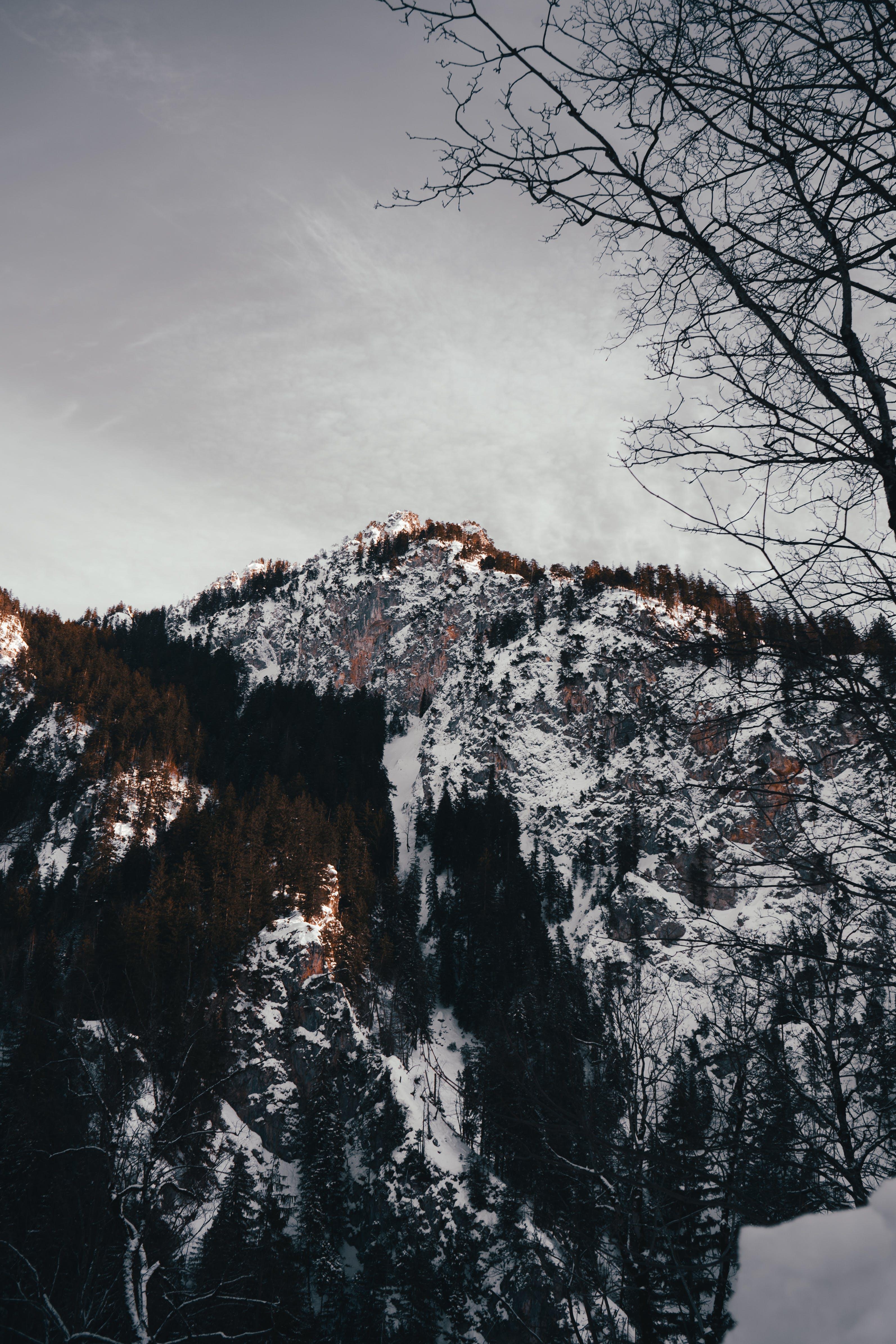 Ingyenes stockfotó csupasz fa, erdő, évszak, fagyos témában