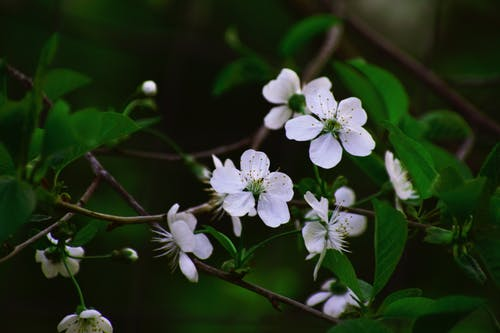 Gratis stockfoto met appelbloesem, bloeiend, bloemblaadjes, bloemen