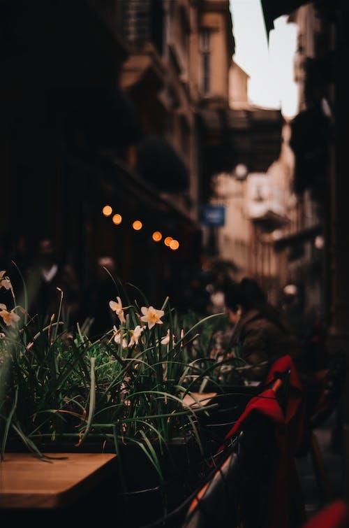 คลังภาพถ่ายฟรี ของ กลางแจ้ง, กลุ่ม, การท่องเที่ยว, ดอกไม้