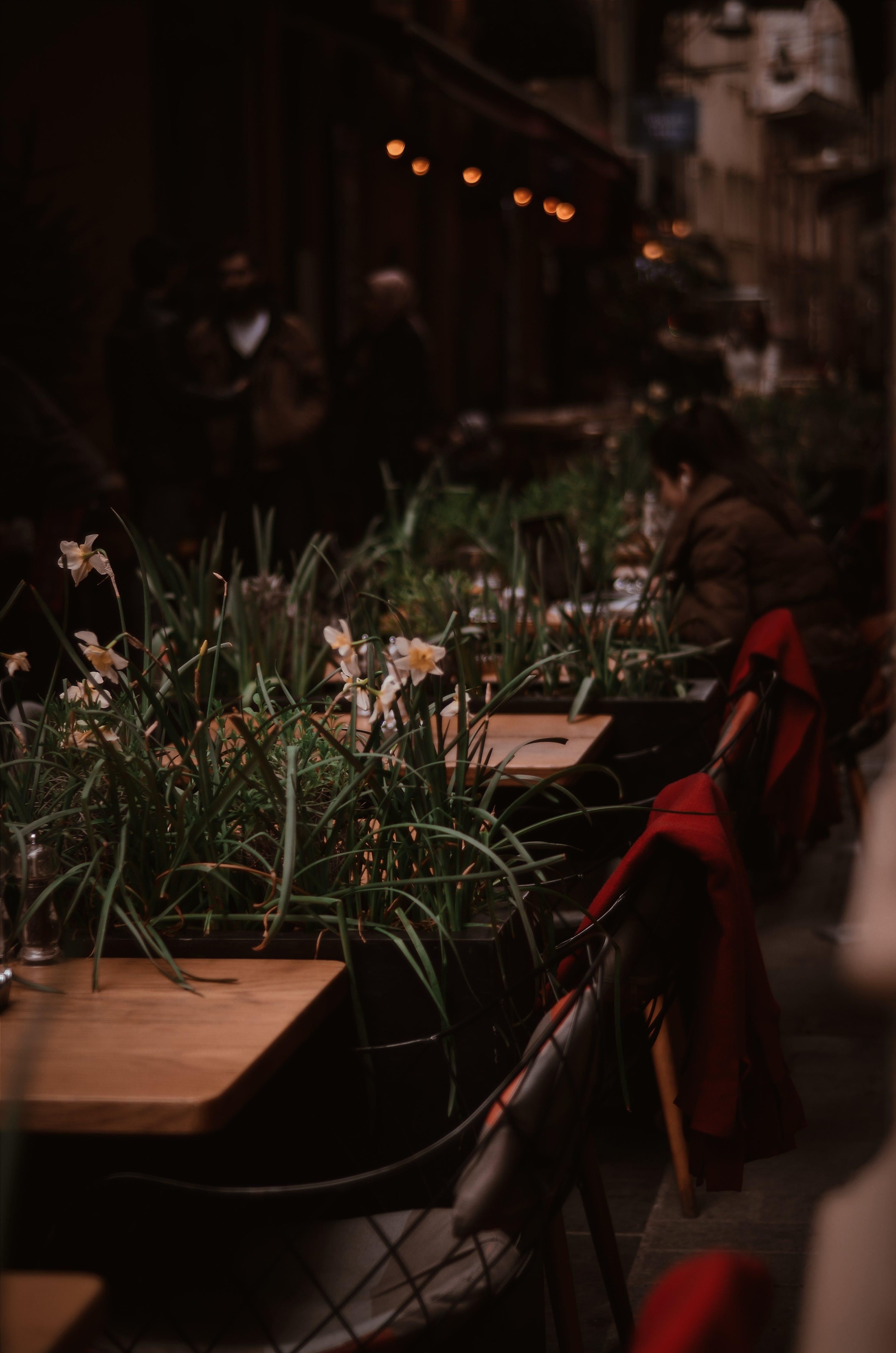 Ảnh lưu trữ miễn phí về ánh sáng, hoa, nhieu cai ghe, những cái bàn