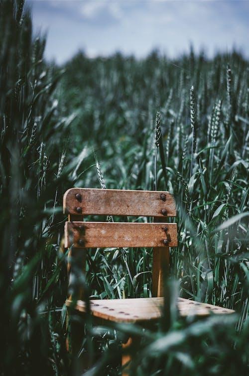 Gratis stockfoto met achtergelaten, akkerland, blad, boerderij