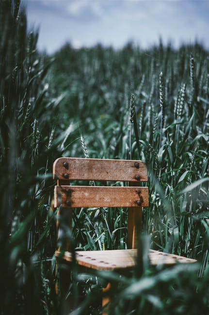 Brown wooden chair in middle of green ffield
