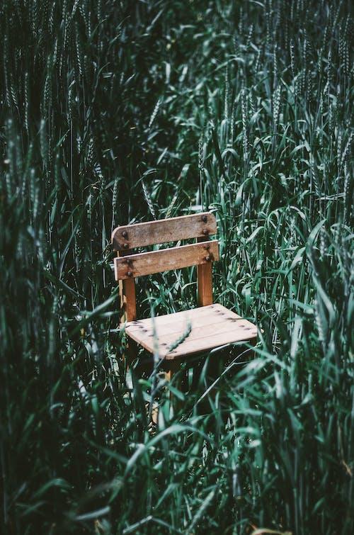 Бесплатное стоковое фото с дерево, деревянный, дневной свет, на открытом воздухе