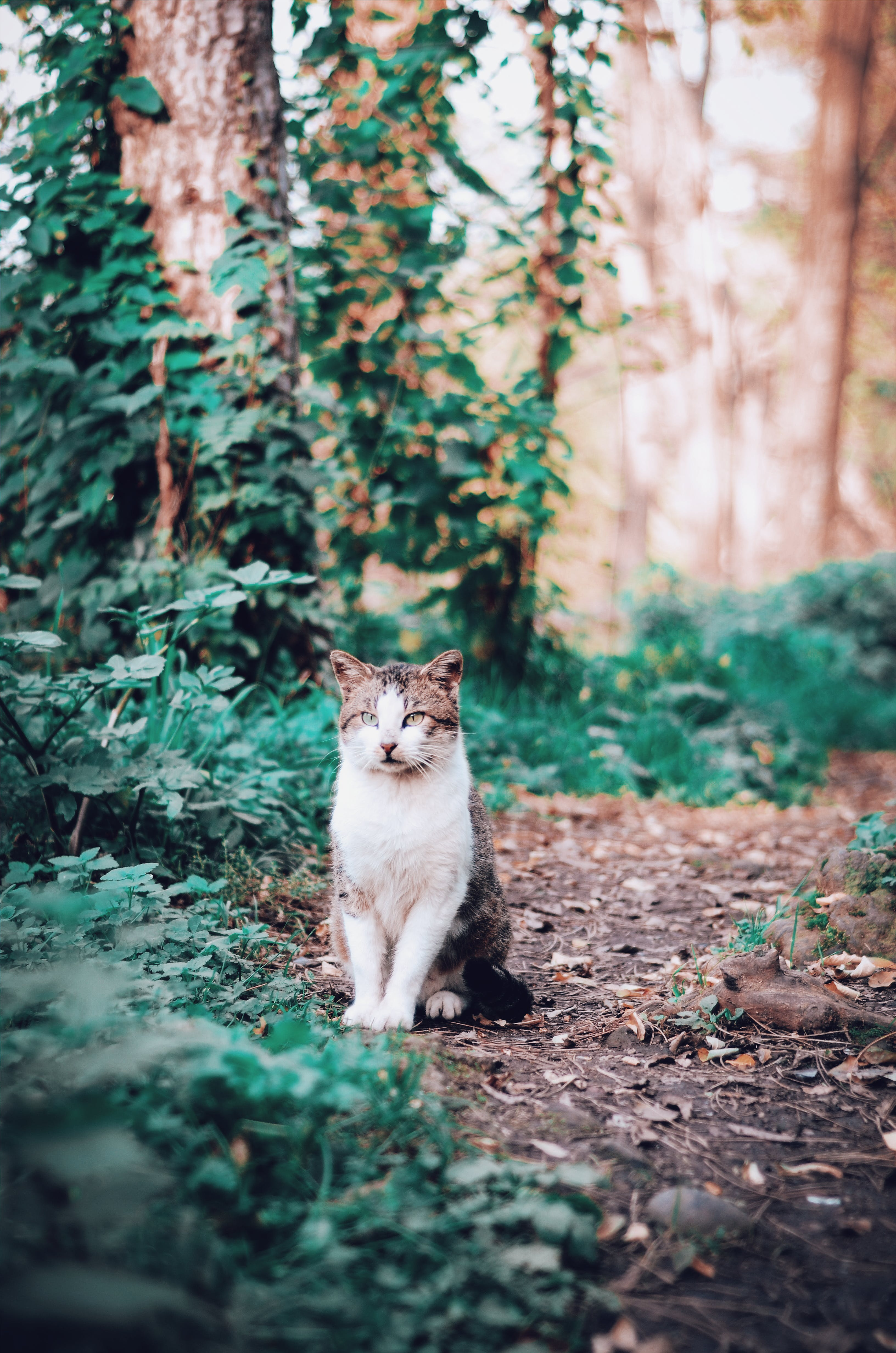 Photo of White and Brown Cat Sitting on The Ground