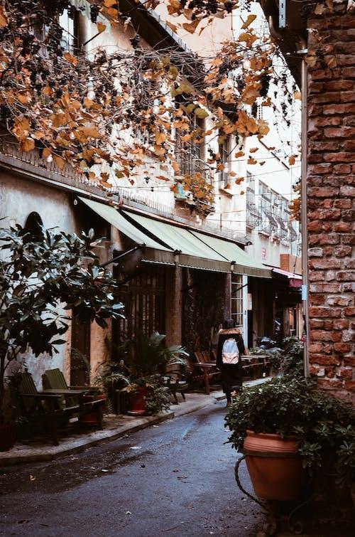 Безкоштовне стокове фото на тему «алея, архітектура, Будівля, вікно»