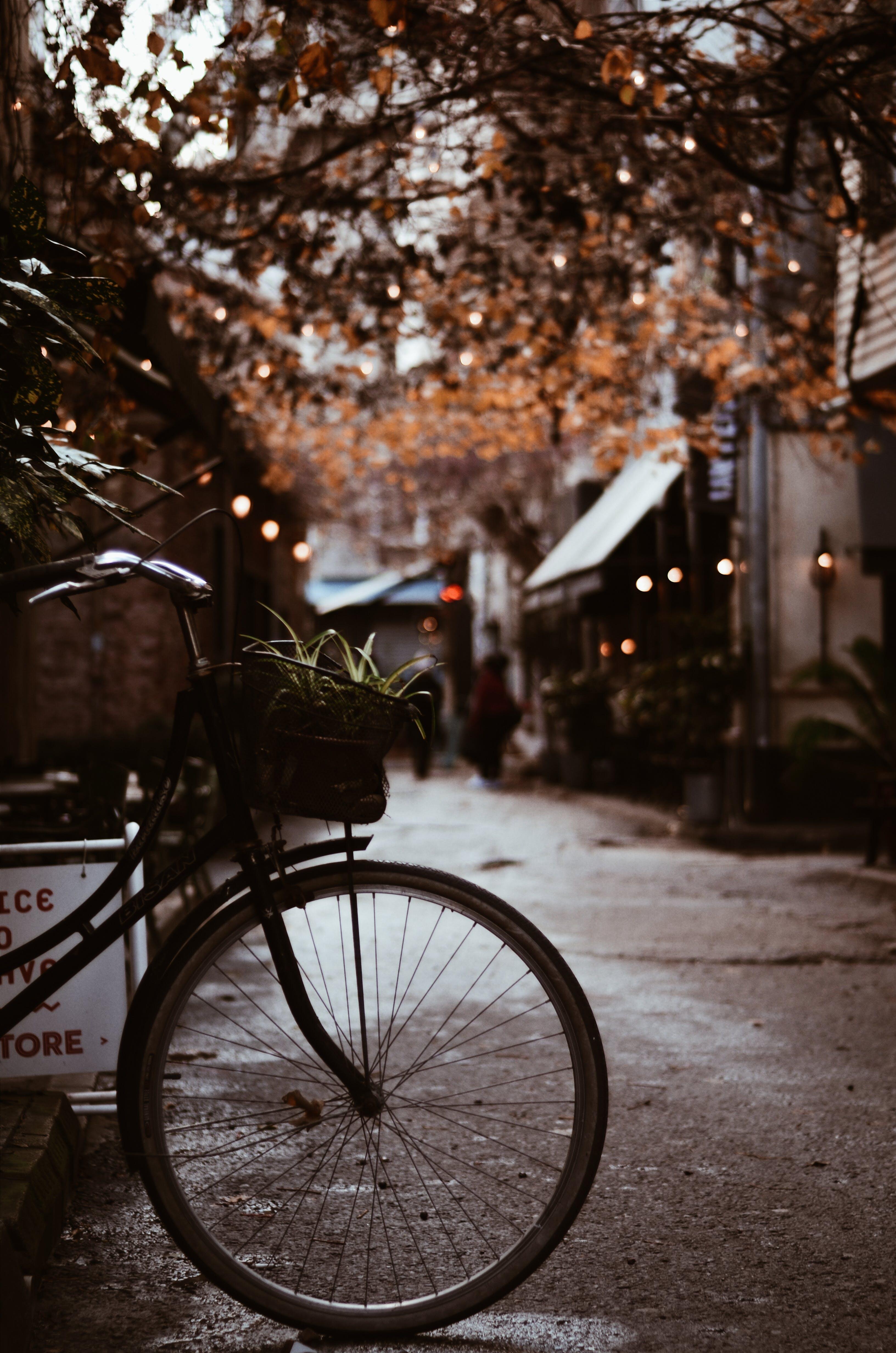Bike With Basket Parked Near Tree