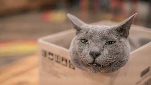 Fotobanka sbezplatnými fotkami na tému mačka, nadýchaný, oči, ospalý