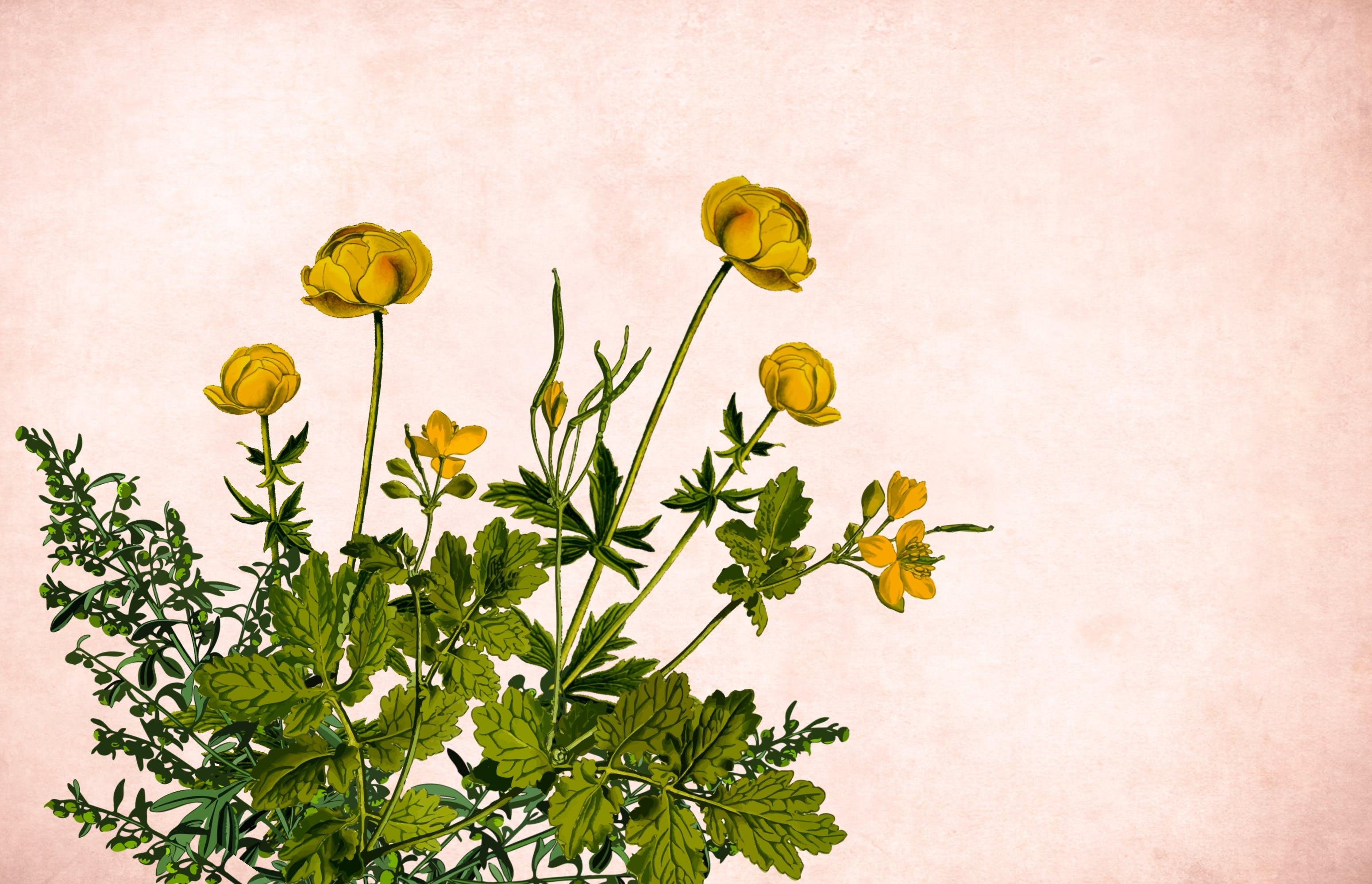 Free stock photo of art, background, border, bouquet