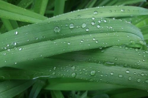 Free stock photo of blob, drop, droplet, drops