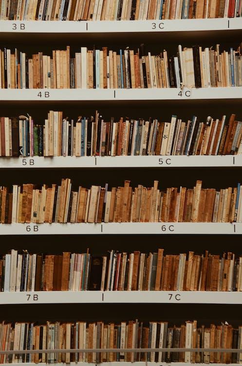 apprendere, biblioteca, conoscenza