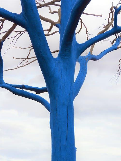 Foto stok gratis proyek pohon biru