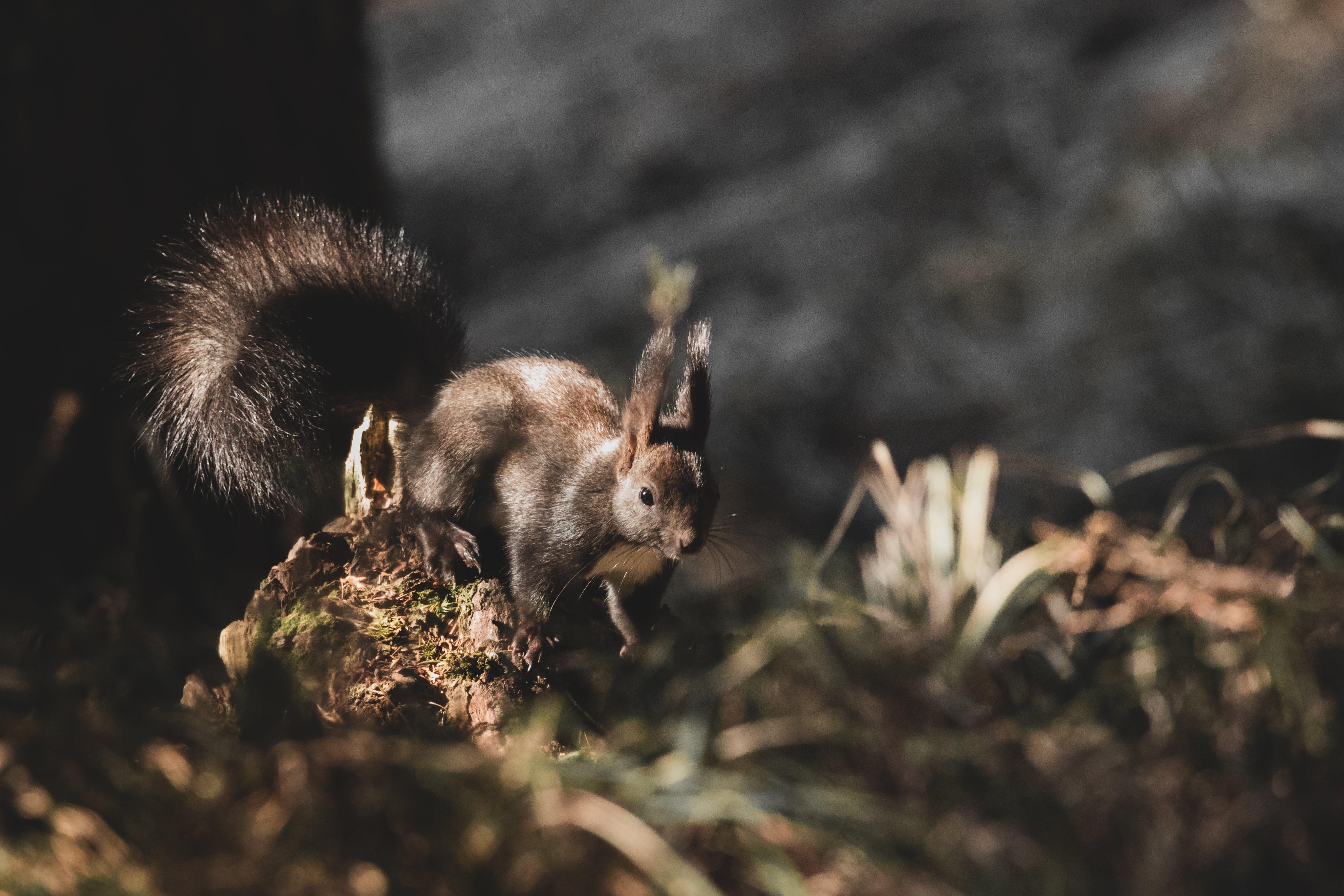 Kostenloses Stock Foto zu eichhörnchen, klein, nagetier, niedlich