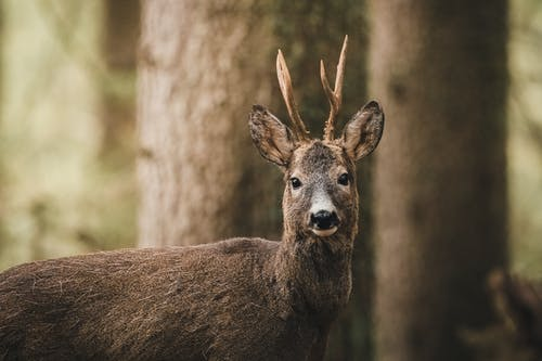 Brown Deer In Selective Focus Photography